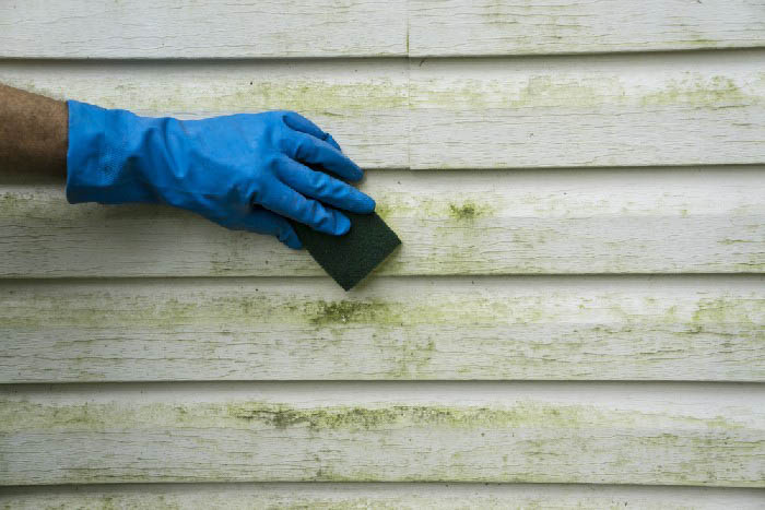 Mold-Clean-Up-Maple-Valley-WA