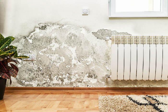 Mold-Removal-Maple-Valley-WA